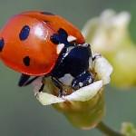 Bir Böceğin Rızkı